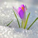 весна, снег