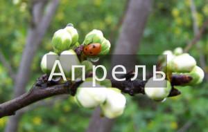 Финстрип апрель