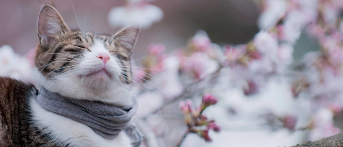 finstrip, финстрип, день котов, день кошек,