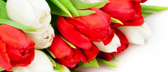 тюльпаны, 8 марта