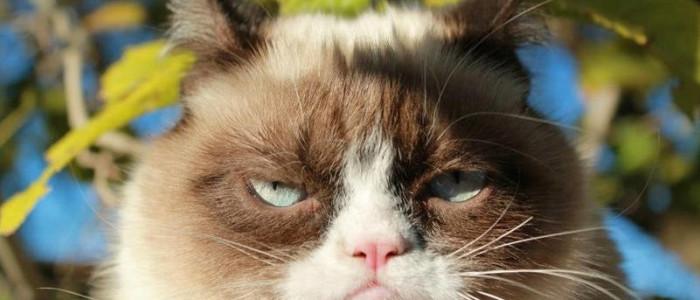 finstrip, кот, 1 апреля